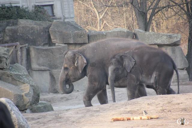Tierpark Friedrichsfelde 29.01.201762