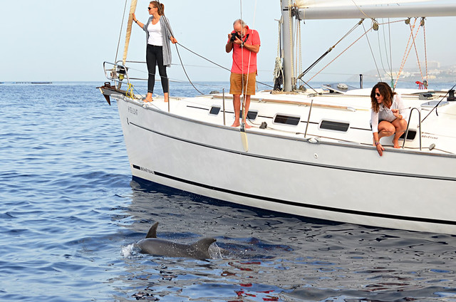 Whale watching with roulette charters, Tenerife