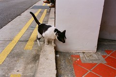 Nikon - Kitty Perch