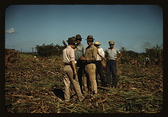 Sugar cane workers resting, Rio Piedras, Puerto Rico  (LOC) | by The Library of Congress