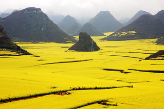 Luoping Rape Flower Fields | by +Lanzi