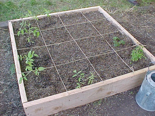 Raised Bed Gardening Squash