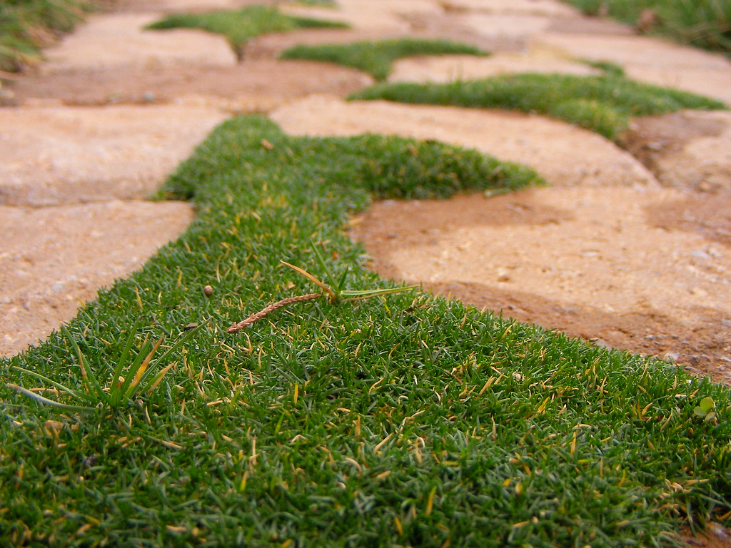 Stone walkway in garden royalty free stock photo image 34535795 - Irish Moss On Path This Is The Irish Moss We Brought With