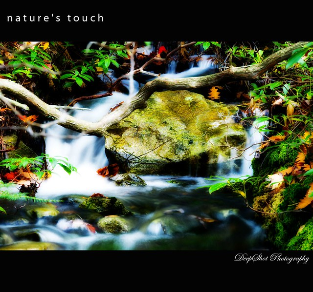 Nature S Touch Abbotsford Bc Vt L
