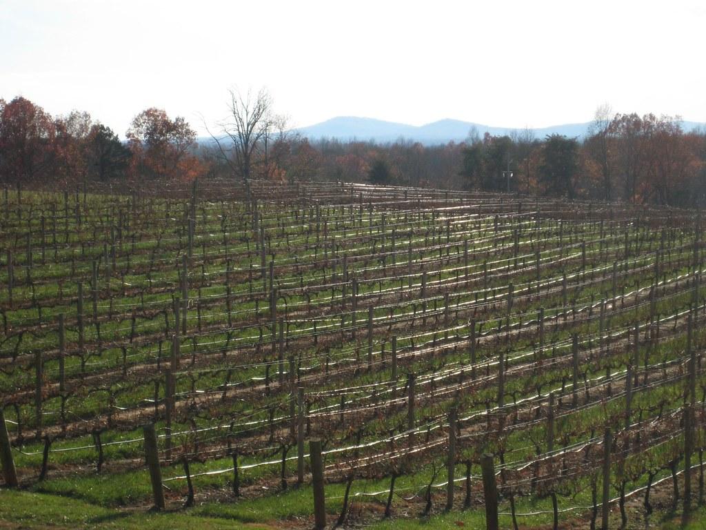 North Carolina Wine Country Tours
