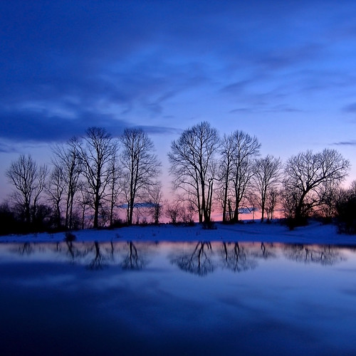 Winter Twilight Trees | by Kirpernicus