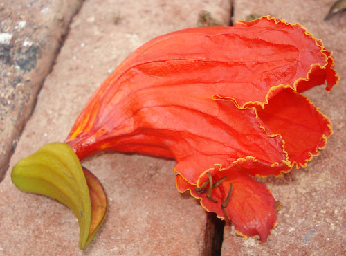 Palash flower | Students of Visva Bharati University ... Palash Flower Wallpaper