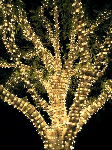 Outside Christmas Lights Blue