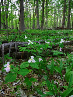 """Forest Floor Diversity"", Ryerson Woods, Lake County, Illinois 