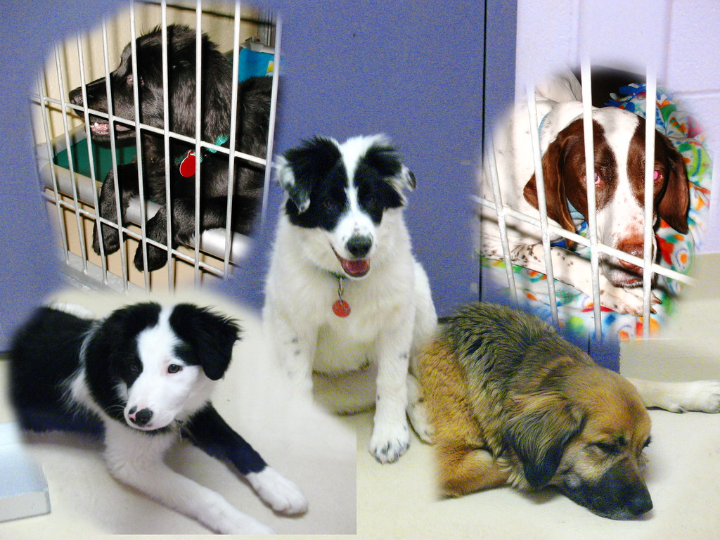 Second Chance Dog Rescue Rehoming Qld