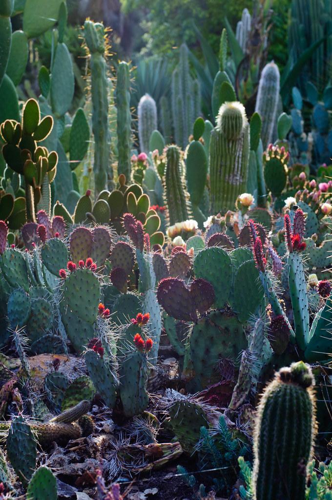 Arizona Cactus Garden | By Pearson3 Arizona Cactus Garden | By Pearson3