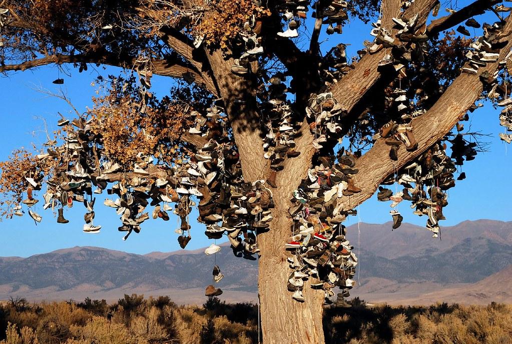 Tree Shoes Nevada Shoe Tree 4 | by Listorama