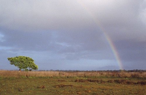West Papua Rainbow