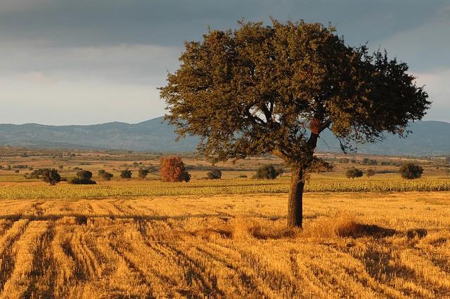 Adrianápolis. Una imagen representativa de Tracia, mezcla de estepas y montes con flora característica del bosque mediterráneo.