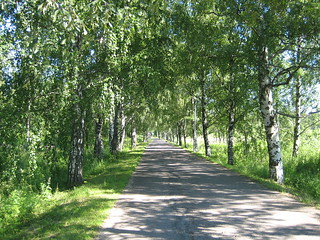 Alley of Birch Trees | by Riihele