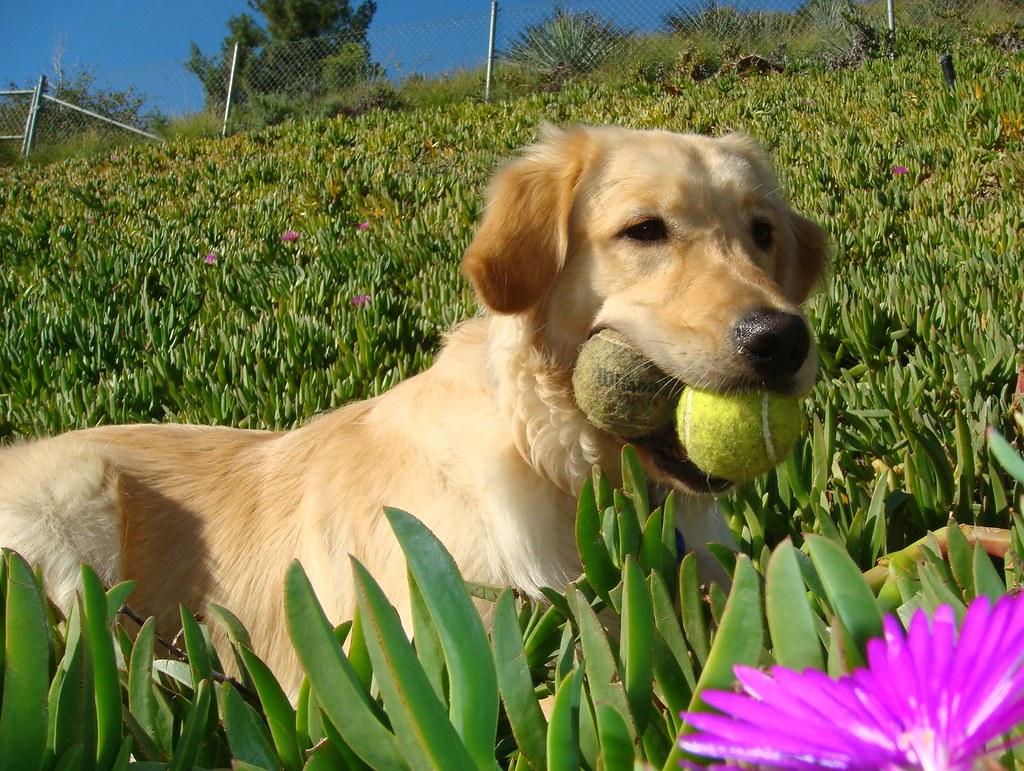 Fetch Dog Training Newton Ma
