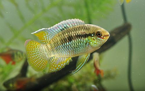 Aquaria on Pinterest Aquarium, Coral Reefs and Aquascaping