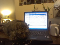 Cat + Keyboard = Work Stoppage | by MontiLee