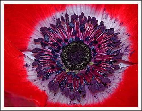 Heart of a Anemone | by Rainer Fritz