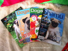 *SMILING PUG* - PUG MAGAZINE COLLECTION //HAPPY VALENTINE'S DAY, FROM THE SWEETHEART PUG GANG & PUG VOGUE *-* | by *SMILING PUG*