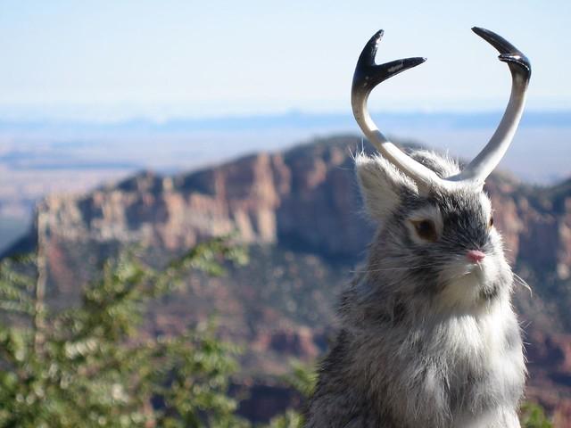 jackalope grand canyon north rim oct 07 mark freeman flickr