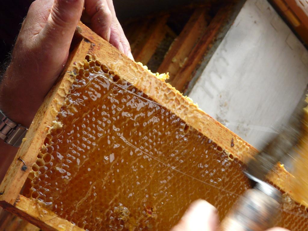 extraction du miel d soperculage des rayons de miel l 39 op flickr. Black Bedroom Furniture Sets. Home Design Ideas