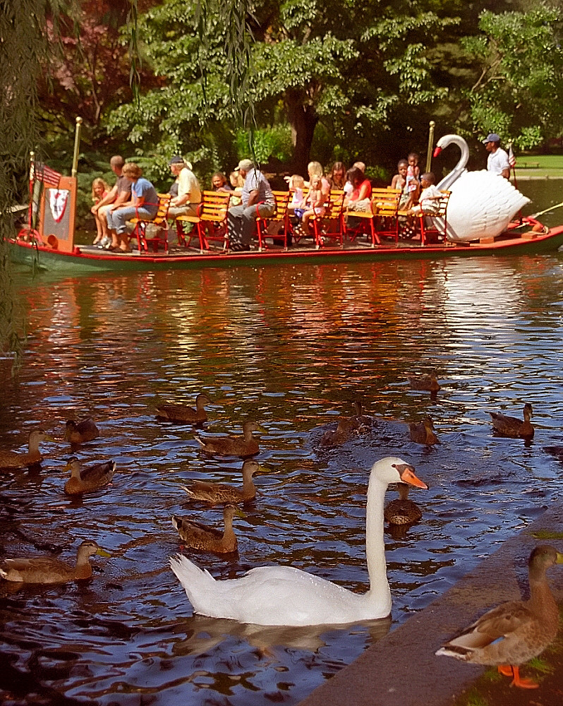Boston Public Gardens - Swan Boat & Swan | David Ohmer | Flickr