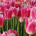 Pink Flower Bed