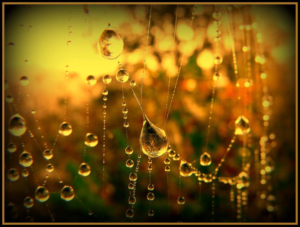 Natur Images Perlen der Natur pearls
