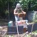 Beekeeping in Alphabet City
