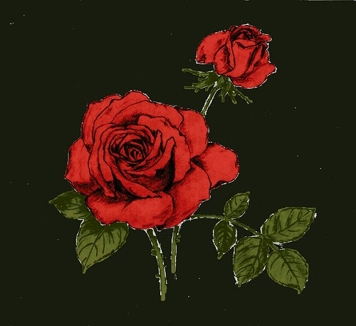 Rose - pencil drawing - computer colored | a colored ...