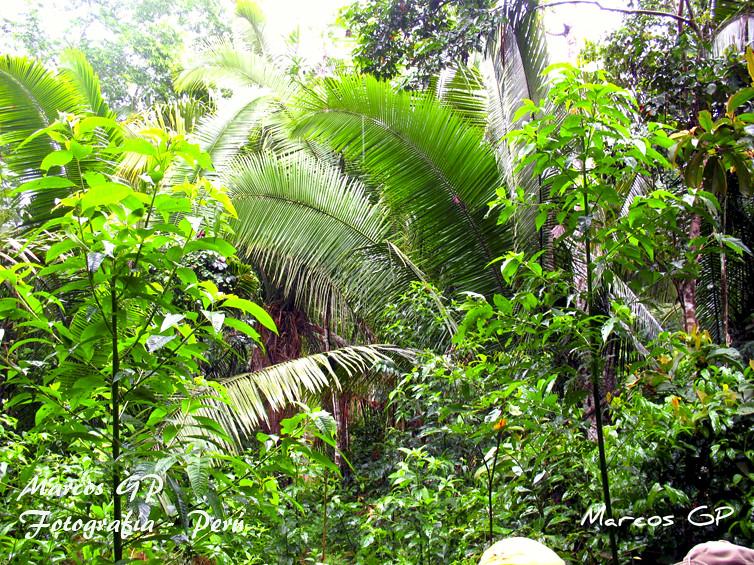 Plantas De Selva Alta: Vegetación En La Selva Baja Del Peru