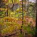 American Legion Forest