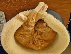 Fetal Position Bed cat in fetal position in cat bed | i am a freelance photogra… | flickr