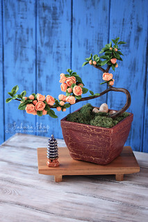 Bonsai Chaenomeles