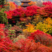 The autumn of Kyoto