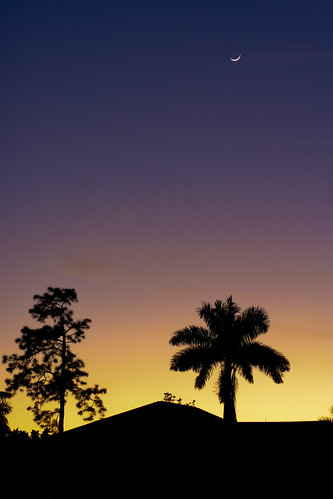 Twilight Palmtree | by MeckiMac