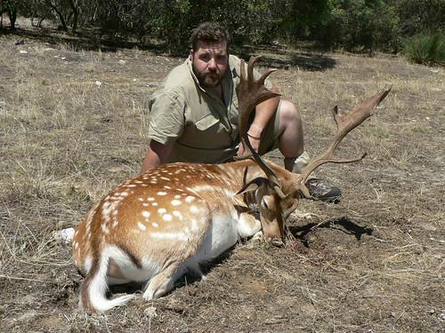 Fallow Hunting