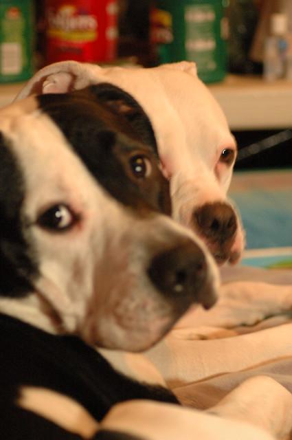 Bug Eyed Dog Pictures