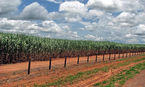 Sugarcane Plantation near Capixaba, Acre, Brazil | by visionshare