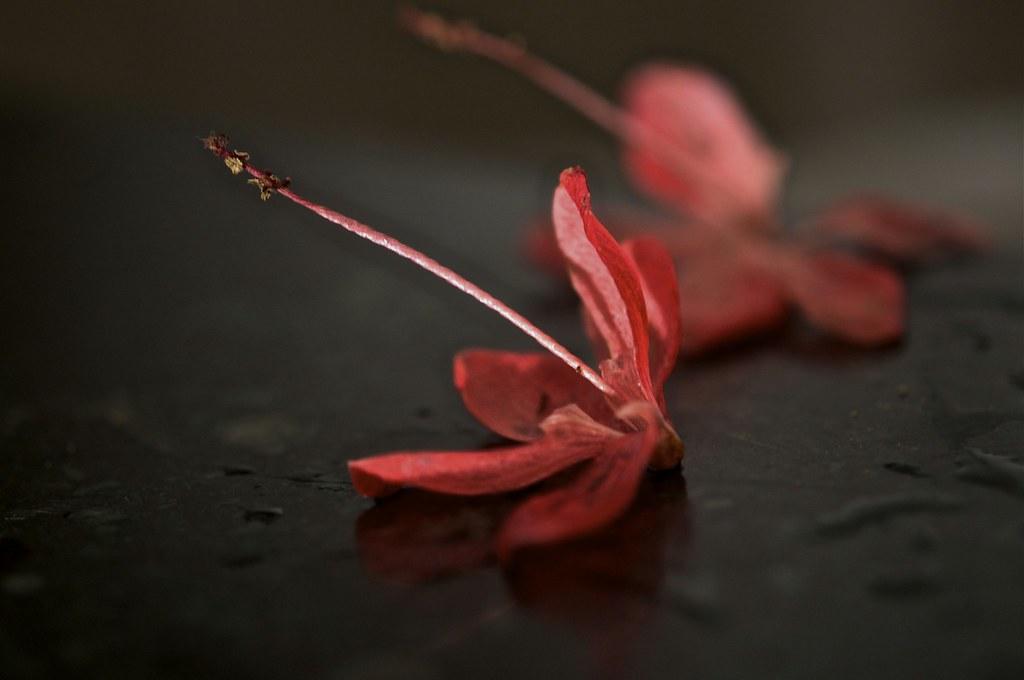 Flower Petals Falling Off Flower | www.pixshark.com ... Petals Falling From A Flower