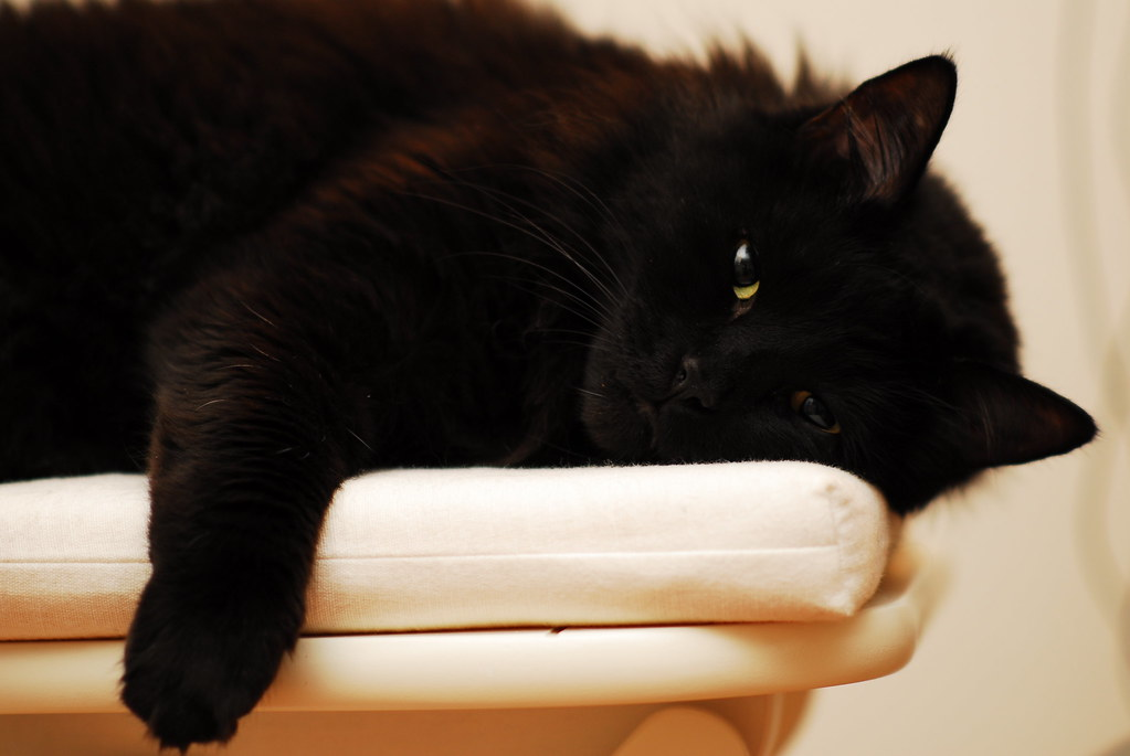 28 Reasons To Love Black Cats