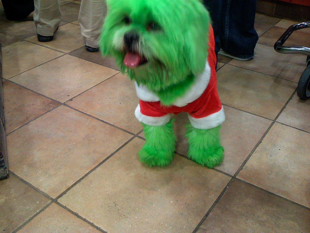 Uncategorized Grinch Dog the grinch dog this won first place for costume co by hankontv