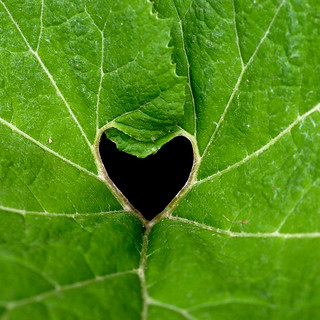 I found a heart today :) | by Werner Schnell (1.stream)