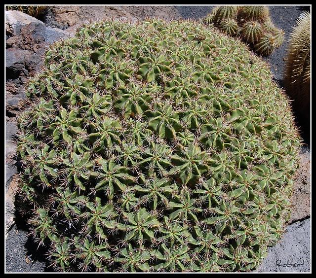 Jard n de cactus flickr photo sharing - Jardin de cactus ...