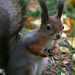 Here be noisy squirrel