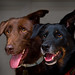 Dogs 3610