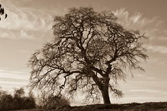 Sepia | by J&M Photography1