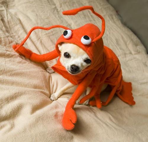 "My Little Lobster Girl | Pearl sez: ""Dang it's hot in here! … | Flickr"