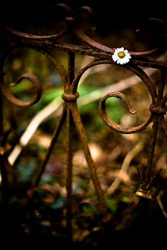 The Suspiciously Located Daisy | by rymus